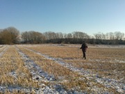 Geophysical Surveys at Great Clemham Suffolk